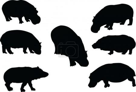 Hippopotamus collection
