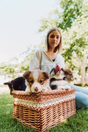 selective focus of blonde girl sitting in green garden near wicker box with puppies